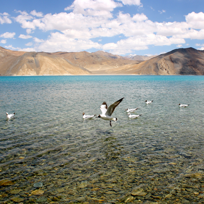 Lakes in Leh Ladakh
